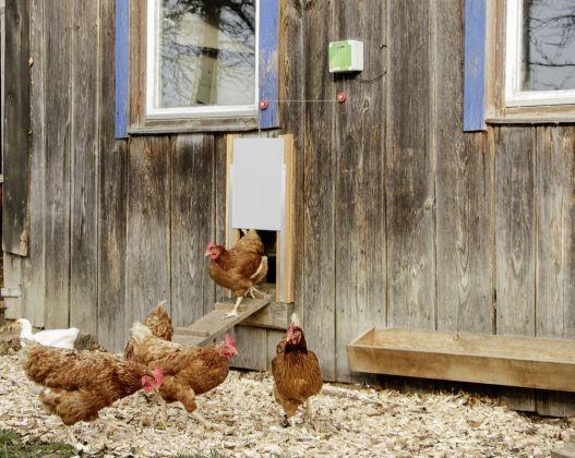 Automatische Hühnertür 300x400